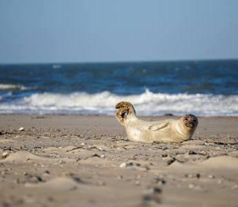 Der Ausblick auf den Strand auf der Ostfriesischen Insel Baltrum